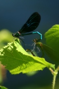 An invasion of damsel fly privacy