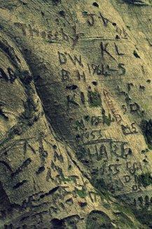 heiroglyph tree cp