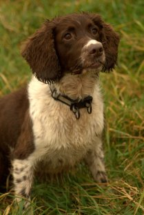 In November we were adopted by a brown spaniel.