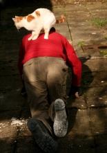 cat transport