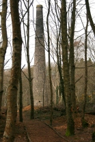 trees and chimney