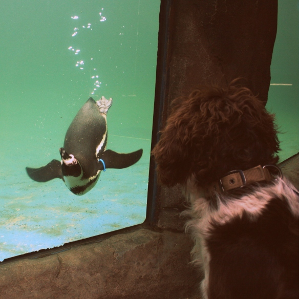 penguin and dog