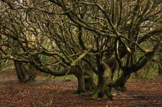 tangle trees sm